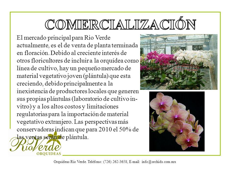 Orquídeas Río Verde. Teléfono: (726) 262-3658, E-mail: info@orchids.com.mx El mercado principal para Rio Verde actualmente, es el de venta de planta t
