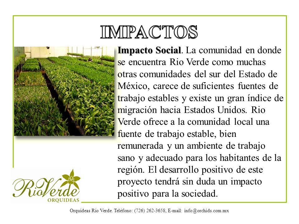 Orquídeas Río Verde. Teléfono: (726) 262-3658, E-mail: info@orchids.com.mx Impacto Social Impacto Social. La comunidad en donde se encuentra Rio Verde