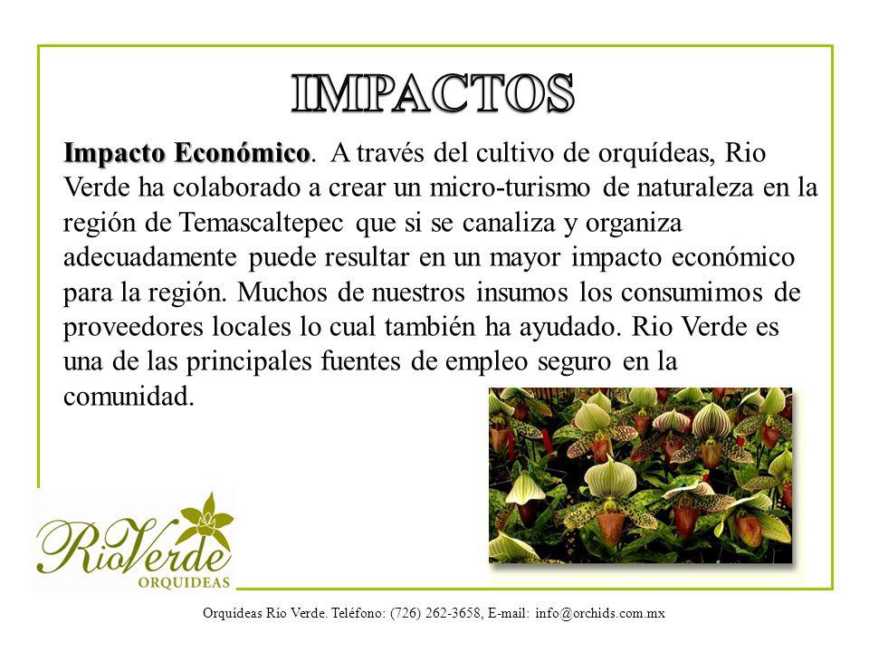 Orquídeas Río Verde. Teléfono: (726) 262-3658, E-mail: info@orchids.com.mx Impacto Económico Impacto Económico. A través del cultivo de orquídeas, Rio