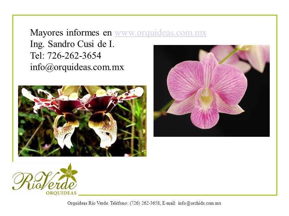 Orquídeas Río Verde. Teléfono: (726) 262-3658, E-mail: info@orchids.com.mx Mayores informes en www.orquideas.com.mxwww.orquideas.com.mx Ing. Sandro Cu