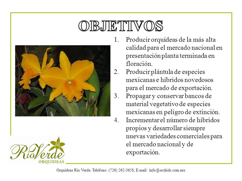 Orquídeas Río Verde. Teléfono: (726) 262-3658, E-mail: info@orchids.com.mx 1.Producir orquídeas de la más alta calidad para el mercado nacional en pre