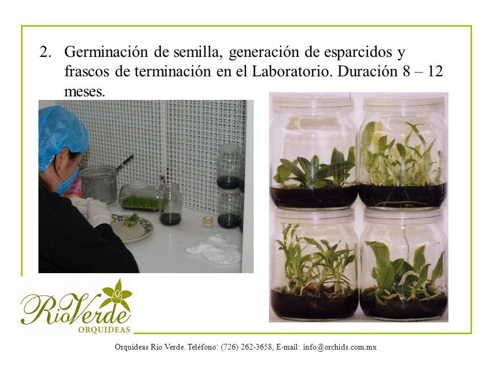 Orquídeas Río Verde. Teléfono: (726) 262-3658, E-mail: info@orchids.com.mx 2. Germinación de semilla, generación de esparcidos y frascos de terminació