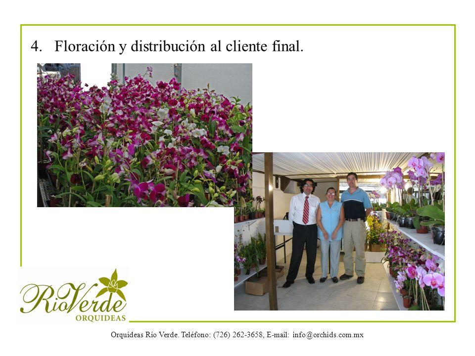 Orquídeas Río Verde. Teléfono: (726) 262-3658, E-mail: info@orchids.com.mx 4. Floración y distribución al cliente final.
