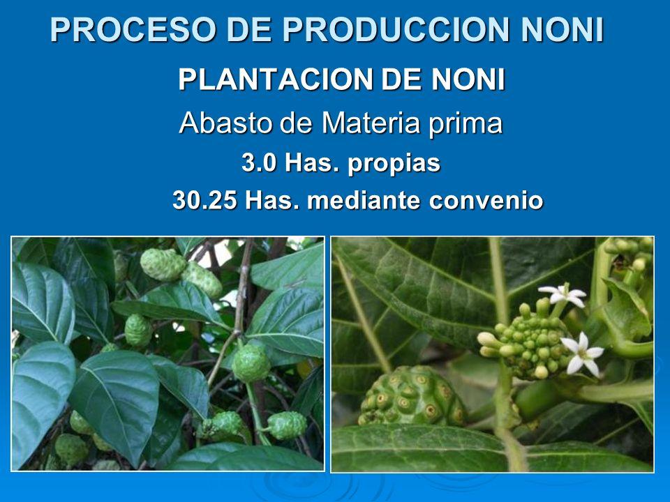 PLANTACION DE NONI Abasto de Materia prima 3.0 Has. propias 30.25 Has. mediante convenio PROCESO DE PRODUCCION NONI