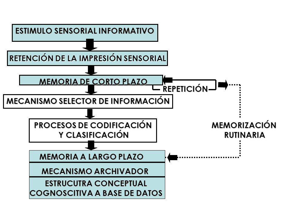 RETENCIÓN DE LA IMPRESIÓN SENSORIAL ESTIMULO SENSORIAL INFORMATIVO MEMORIA DE CORTO PLAZO MECANISMO SELECTOR DE INFORMACIÓN PROCESOS DE CODIFICACIÓN Y
