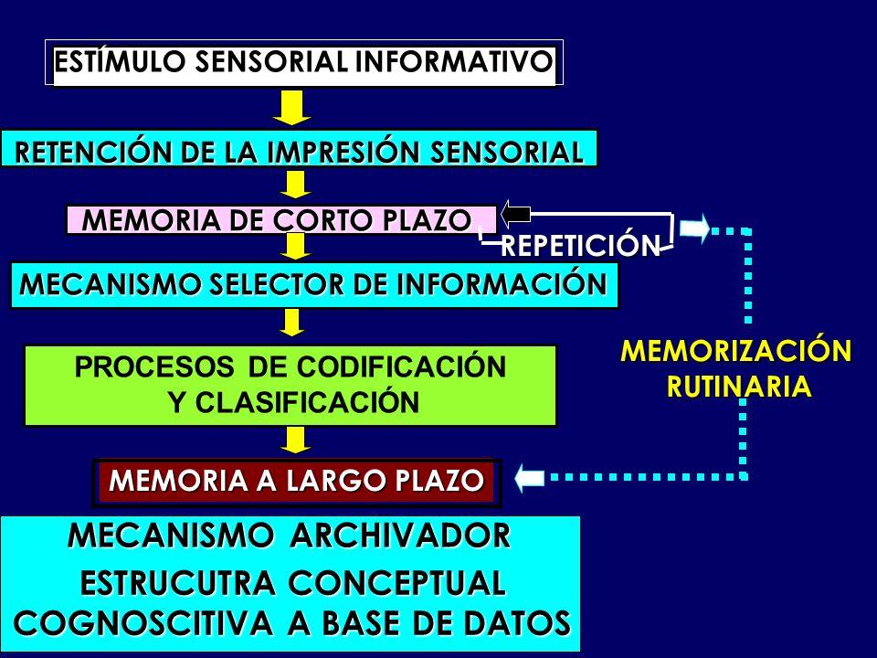 RETENCIÓN DE LA IMPRESIÓN SENSORIAL ESTÍMULO SENSORIAL INFORMATIVO MEMORIA DE CORTO PLAZO MECANISMO SELECTOR DE INFORMACIÓN PROCESOS DE CODIFICACIÓN Y