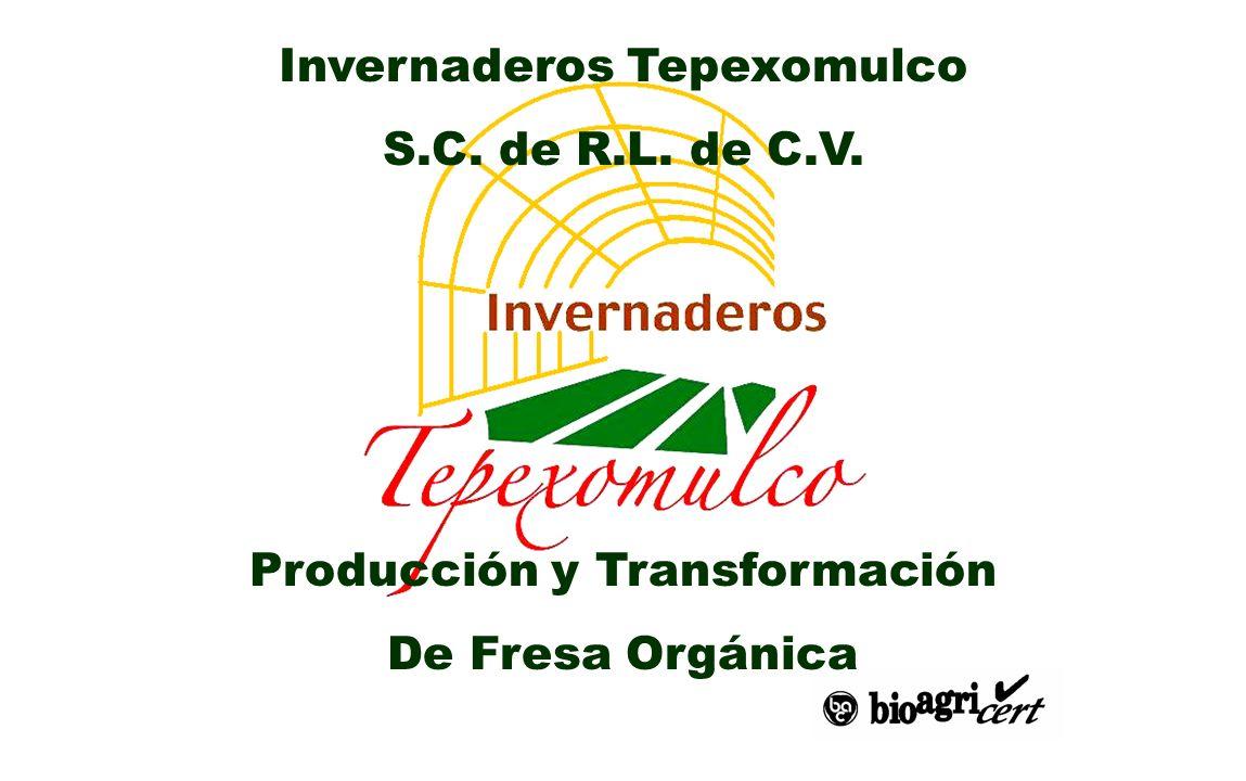 Invernaderos Tepexomulco S.C. de R.L. de C.V. Producción y Transformación De Fresa Orgánica