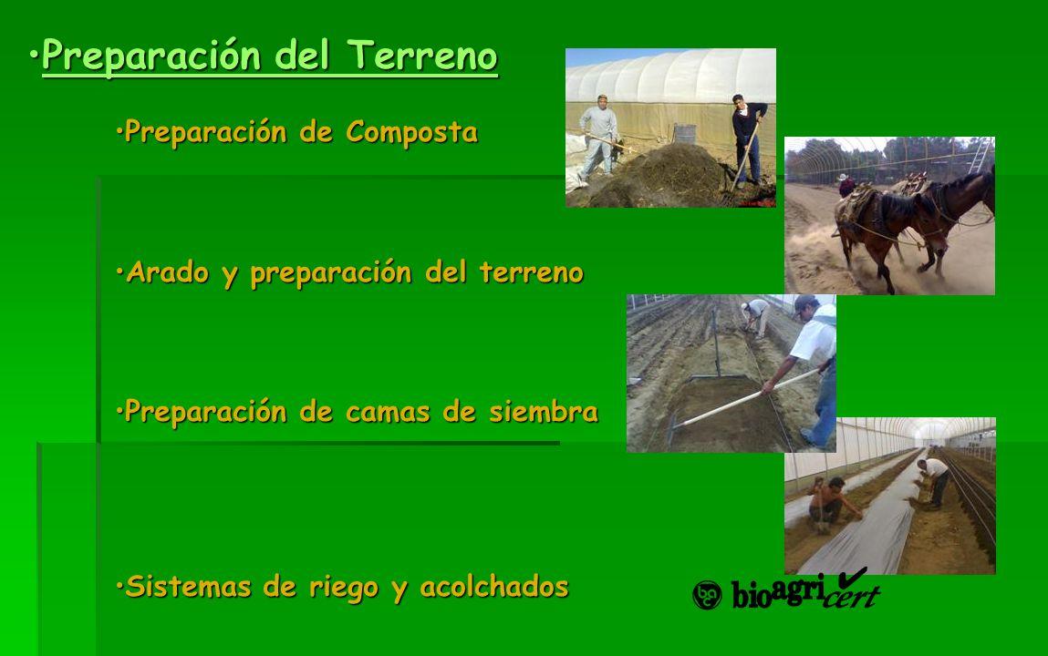 Preparación del TerrenoPreparación del TerrenoPreparación del TerrenoPreparación del Terreno Preparación de CompostaPreparación de Composta Arado y pr