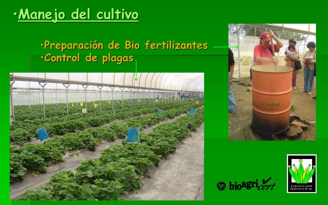 Manejo del cultivoManejo del cultivoManejo del cultivoManejo del cultivo Preparación de Bio fertilizantesPreparación de Bio fertilizantes Control de p