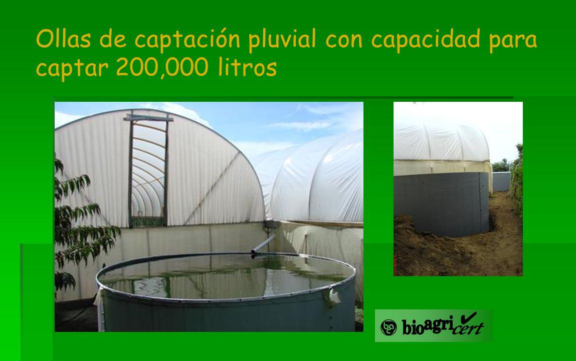 Ollas de captación pluvial con capacidad para captar 200,000 litros