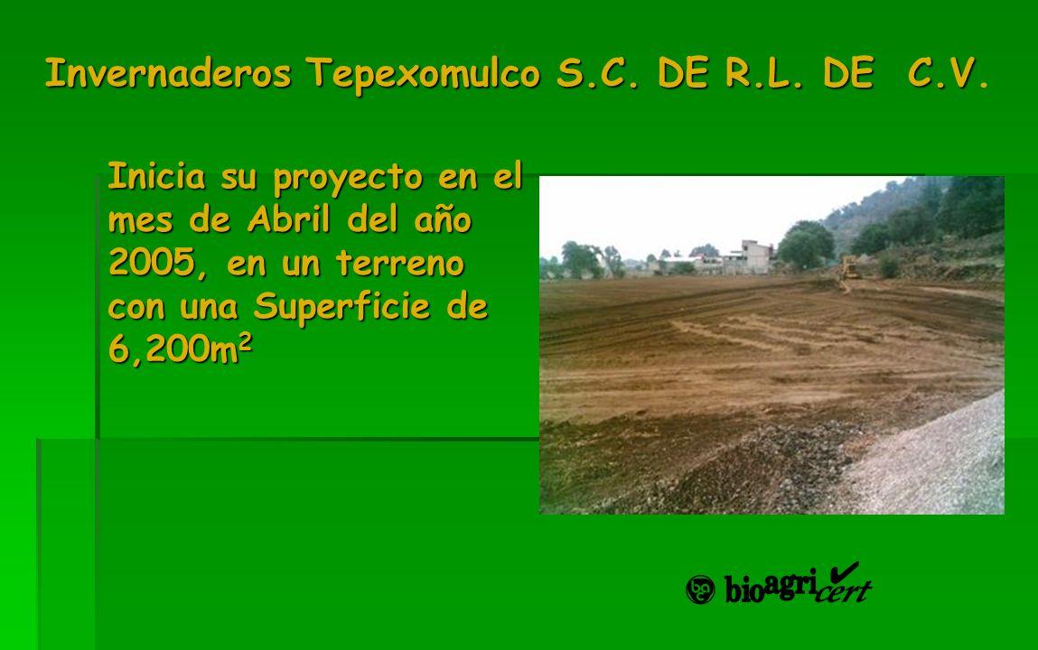 Invernaderos Tepexomulco S.C. DE R.L. DE C.V Invernaderos Tepexomulco S.C. DE R.L. DE C.V. Inicia su proyecto en el mes de Abril del año 2005, en un t