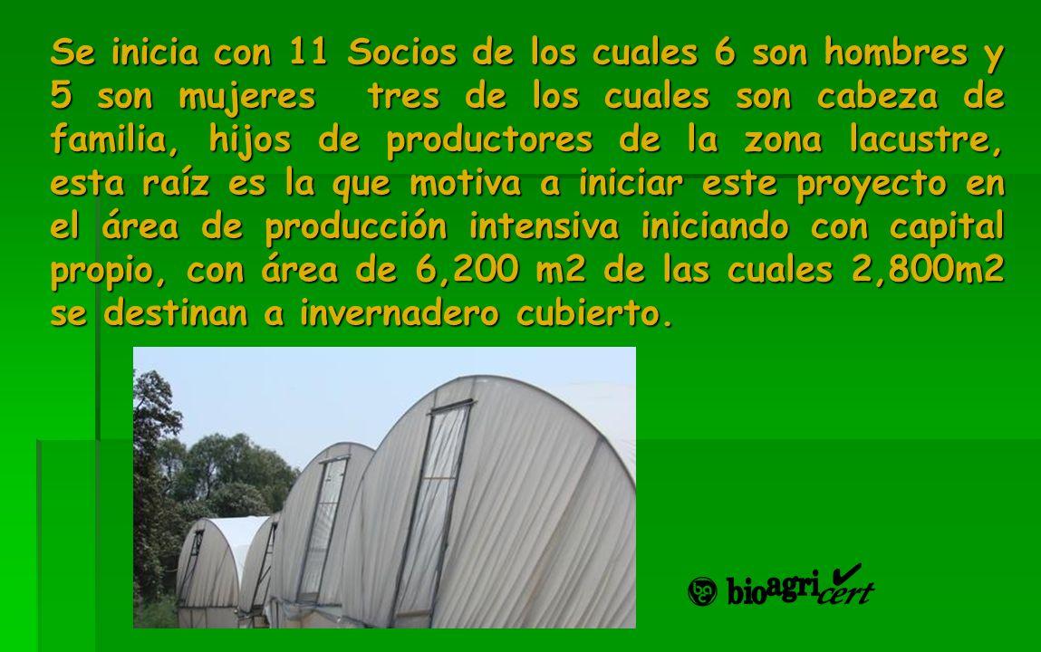 Se inicia con 11 Socios de los cuales 6 son hombres y 5 son mujeres tres de los cuales son cabeza de familia, hijos de productores de la zona lacustre