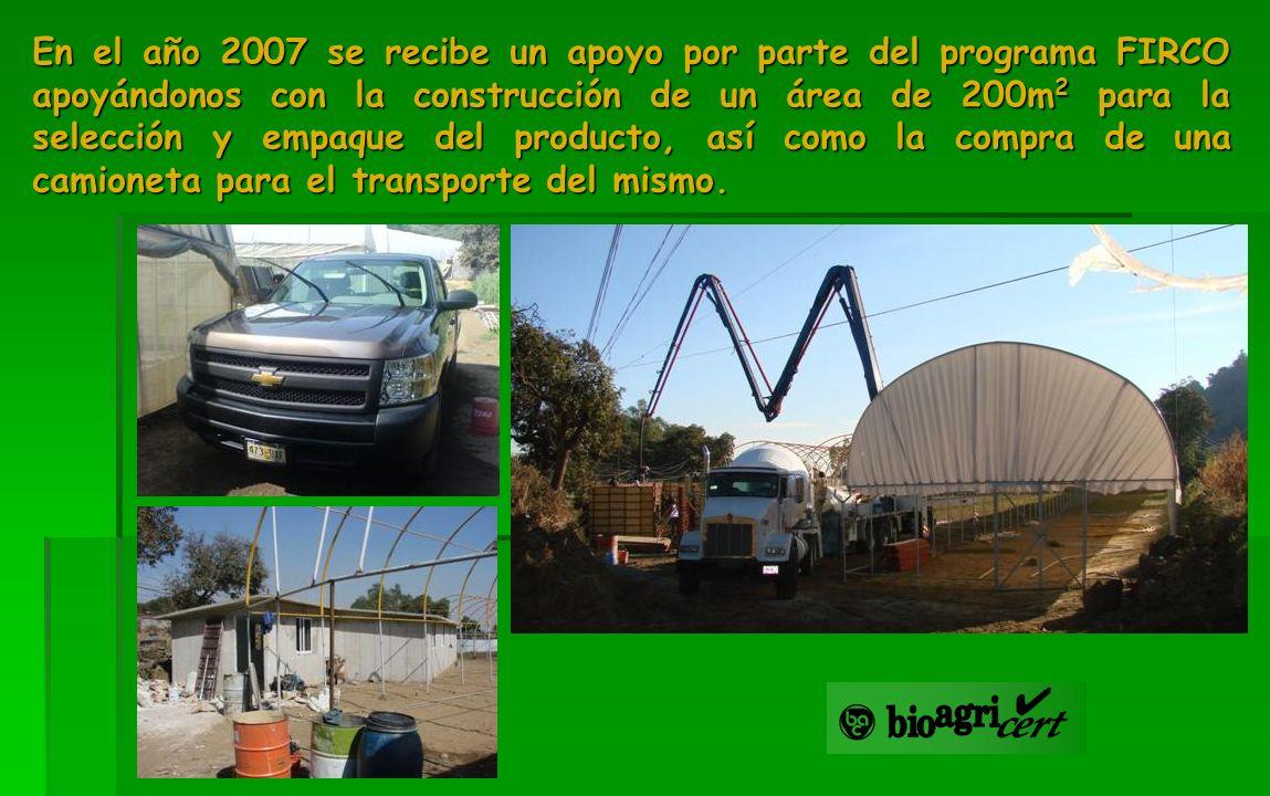 En el año 2007 se recibe un apoyo por parte del programa FIRCO apoyándonos con la construcción de un área de 200m 2 para la selección y empaque del pr