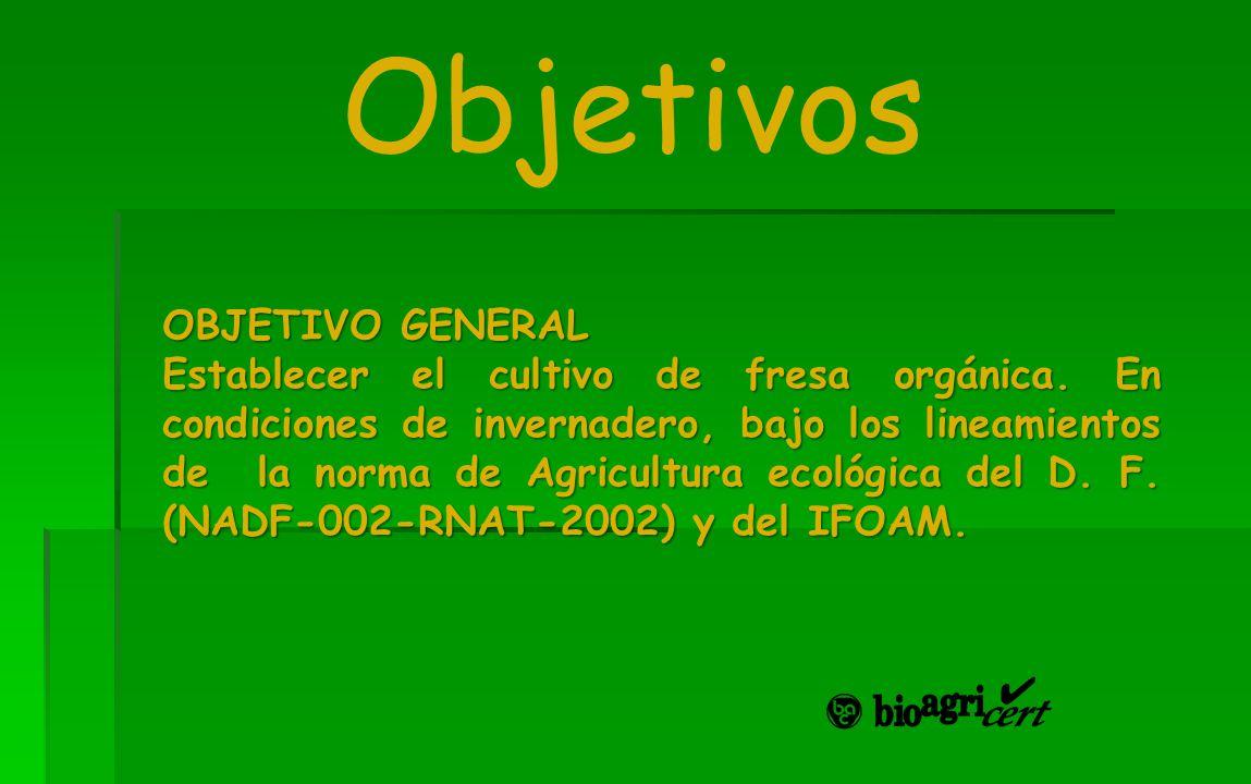 Objetivos OBJETIVO GENERAL Establecer el cultivo de fresa orgánica. En condiciones de invernadero, bajo los lineamientos de la norma de Agricultura ec