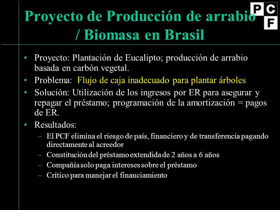 Proyecto: Plantación de Eucalipto; producción de arrabio basada en carbón vegetal.