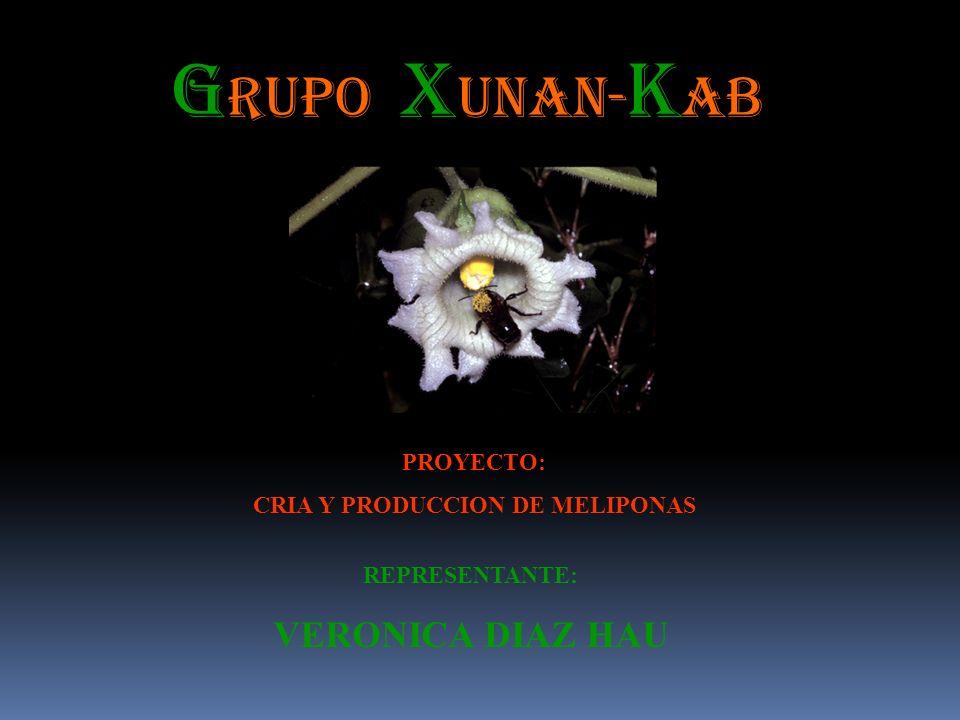 G RUPO: X UNAN- k AB REPRESENTANTE: VERONICA DIAZ HAU PROYECTO: CRIA Y PRODUCCION DE MELIPONAS