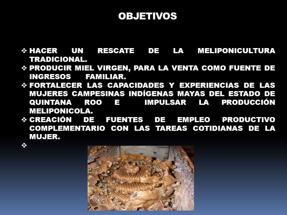OBJETIVOS HACER UN RESCATE DE LA MELIPONICULTURA TRADICIONAL. PRODUCIR MIEL VIRGEN, PARA LA VENTA COMO FUENTE DE INGRESOS FAMILIAR. FORTALECER LAS CAP