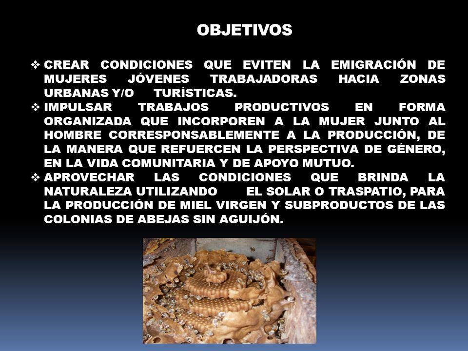 METAS INCREMENTAR EL NÚMERO DE COLONIAS DEL MELIPONARIO EN EL SEGUNDO AÑO.