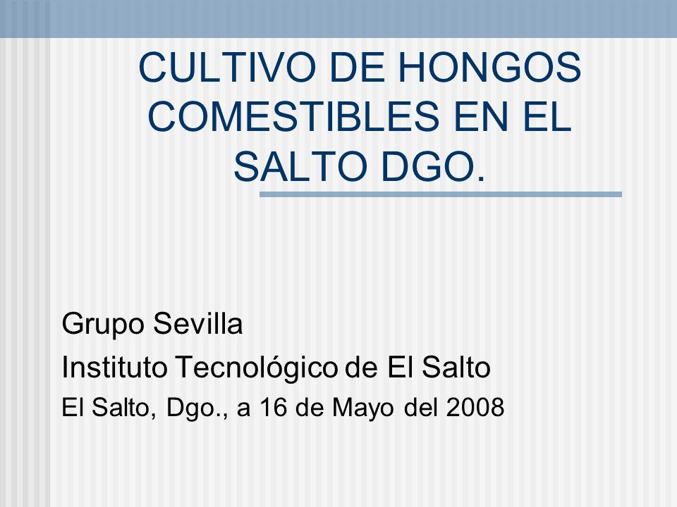 CULTIVO DE HONGOS COMESTIBLES EN EL SALTO DGO. Grupo Sevilla Instituto Tecnológico de El Salto El Salto, Dgo., a 16 de Mayo del 2008