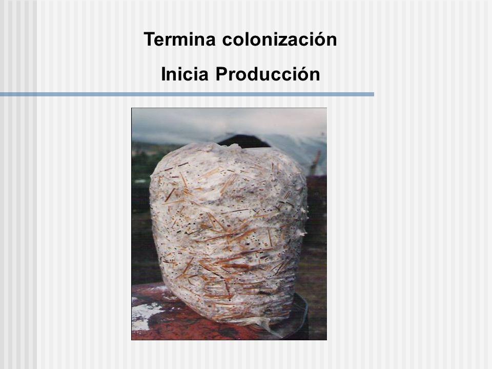 Termina colonización Inicia Producción