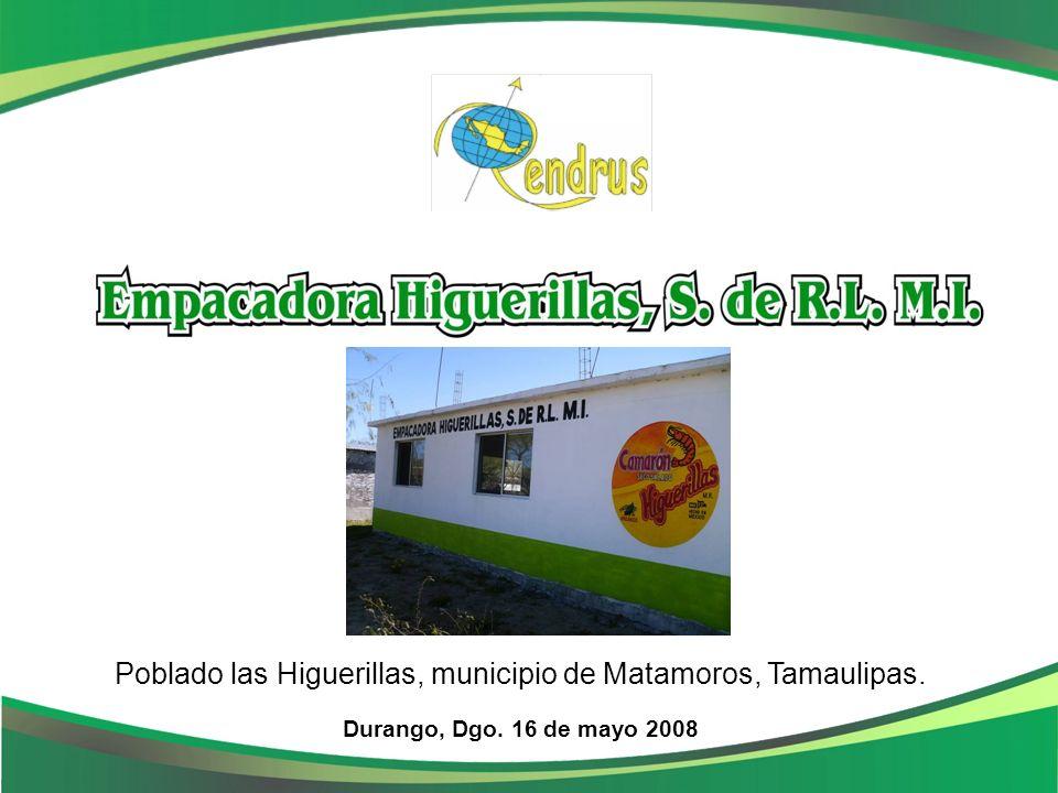 Camarón Las Higuerillas Durango, Dgo. 16 de mayo 2008 Poblado las Higuerillas, municipio de Matamoros, Tamaulipas.