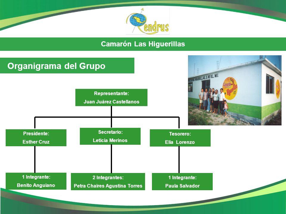 Camarón Las Higuerillas Organigrama del Grupo Representante: Juan Juárez Castellanos Presidente: Esther Cruz Secretario: Leticia Merinos Tesorero: Eli