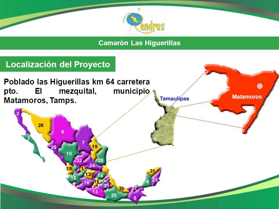 Camarón Las Higuerillas Localización del Proyecto Poblado las Higuerillas km 64 carretera pto. El mezquital, municipio Matamoros, Tamps. Matamoros