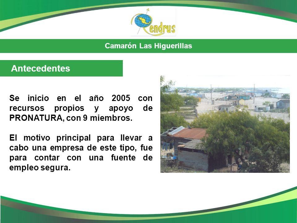 Camarón Las Higuerillas Antecedentes Se inicio en el año 2005 con recursos propios y apoyo de PRONATURA, con 9 miembros. El motivo principal para llev