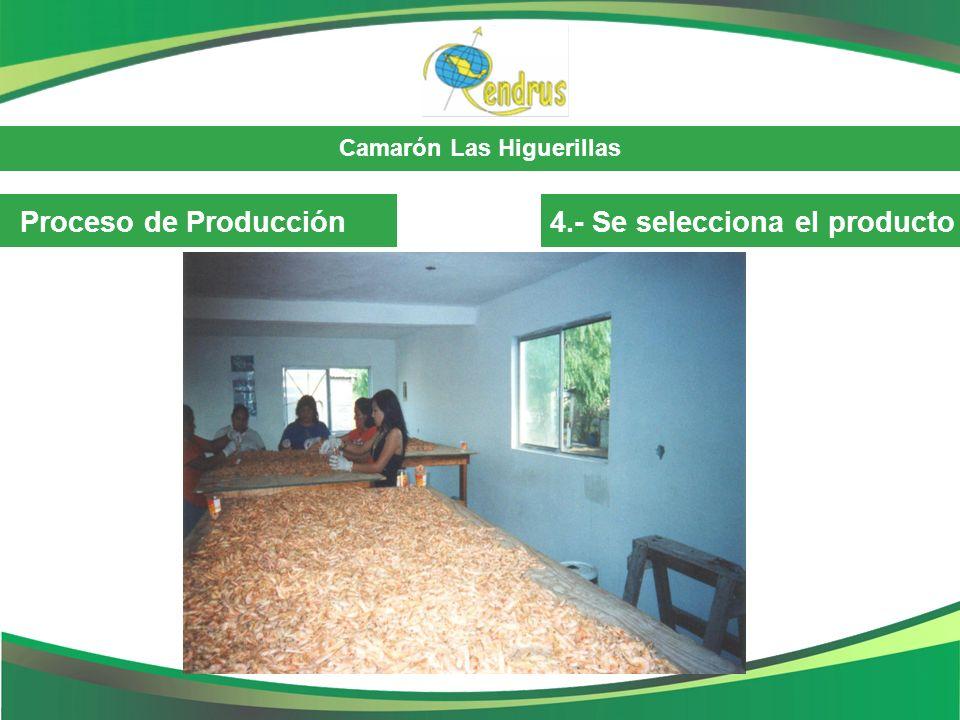 Camarón Las Higuerillas Proceso de Producción4.- Se selecciona el producto
