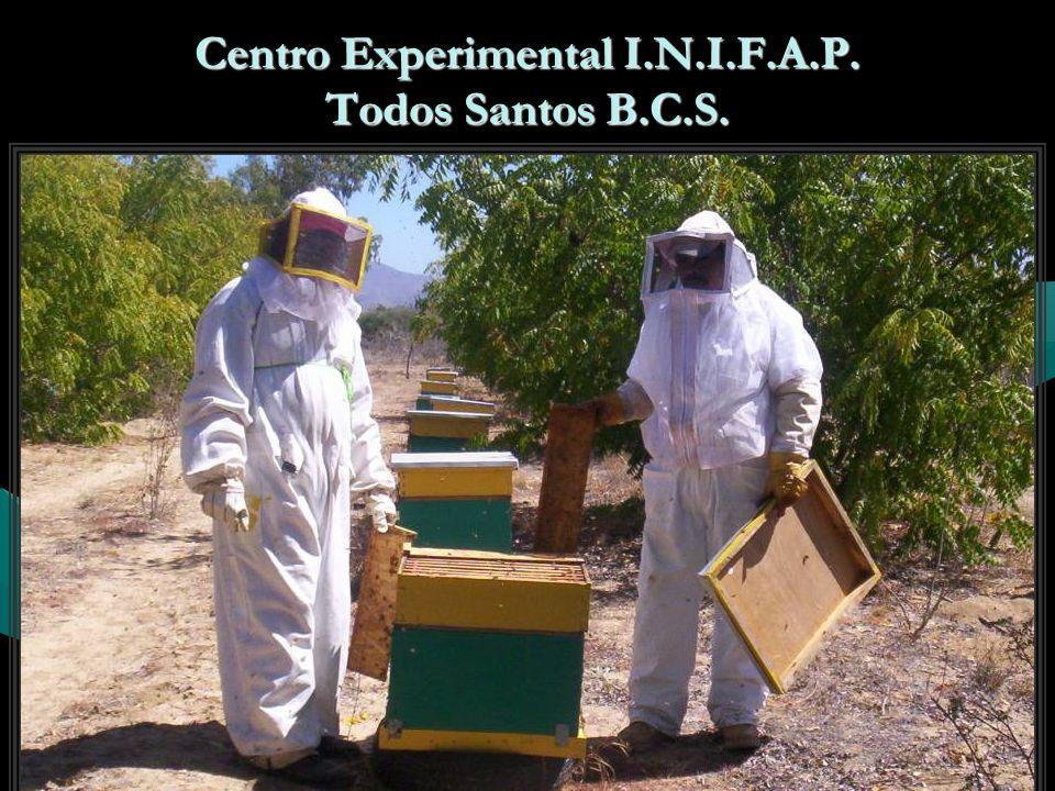 Centro Experimental I.N.I.F.A.P. Todos Santos B.C.S.