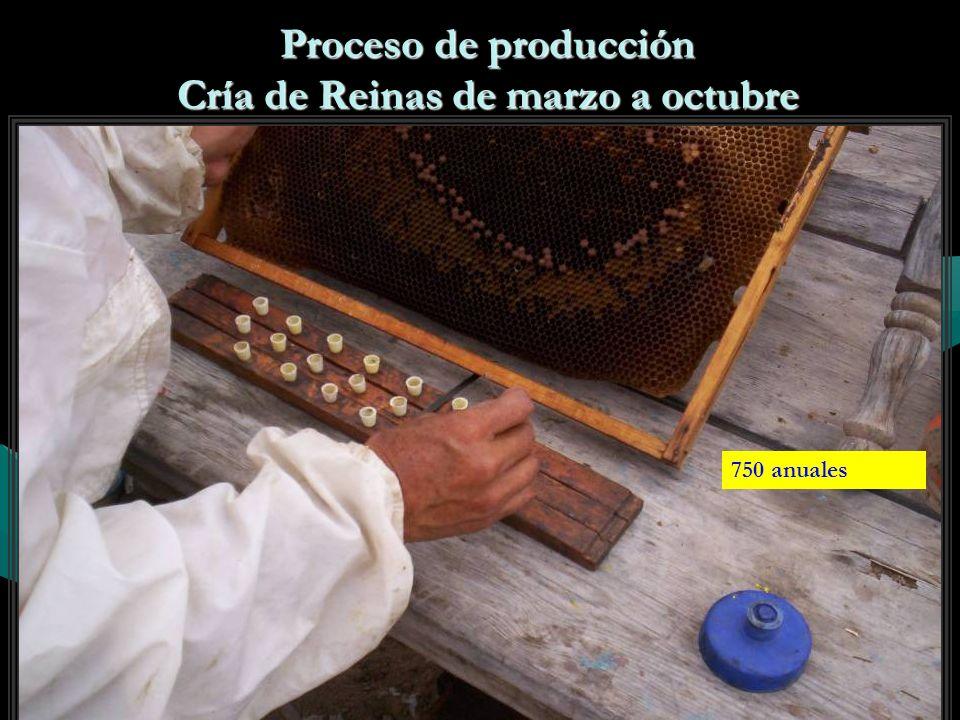 Proceso de producción Cría de Reinas de marzo a octubre 750 anuales