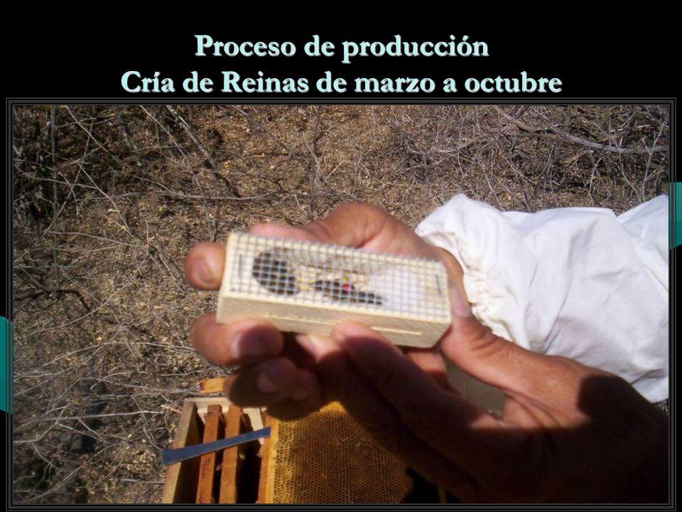 Producción de Núcleos Abril - Octubre 250 anual