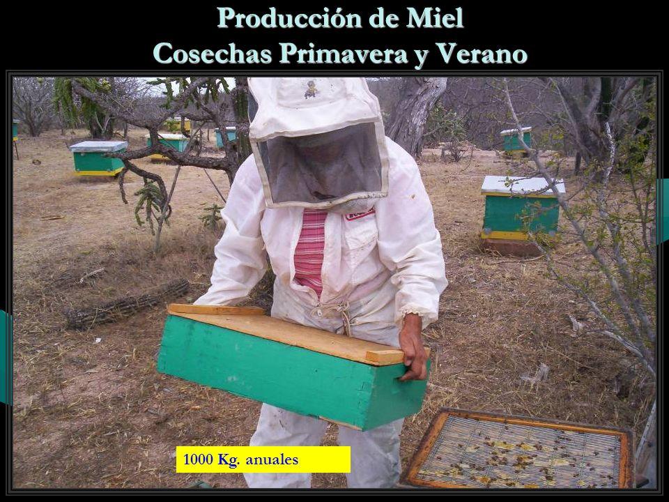 Producción de Miel Cosechas Primavera y Verano 1000 Kg. anuales