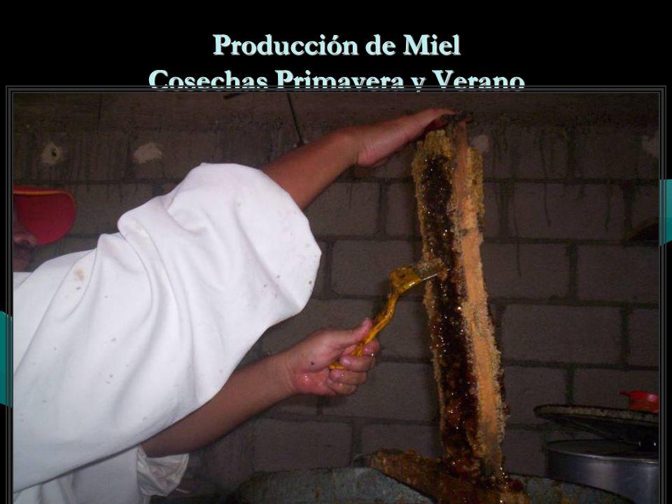 Producción de Miel Cosechas Primavera y Verano