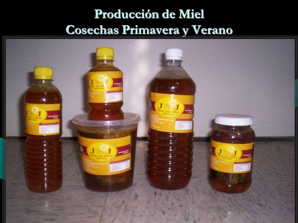 Producción Actualmente producimos la cantidad de:Actualmente producimos la cantidad de: Reinas750Reinas750 Núcleos250Núcleos250 Miel1000 Kg.Miel1000 Kg.