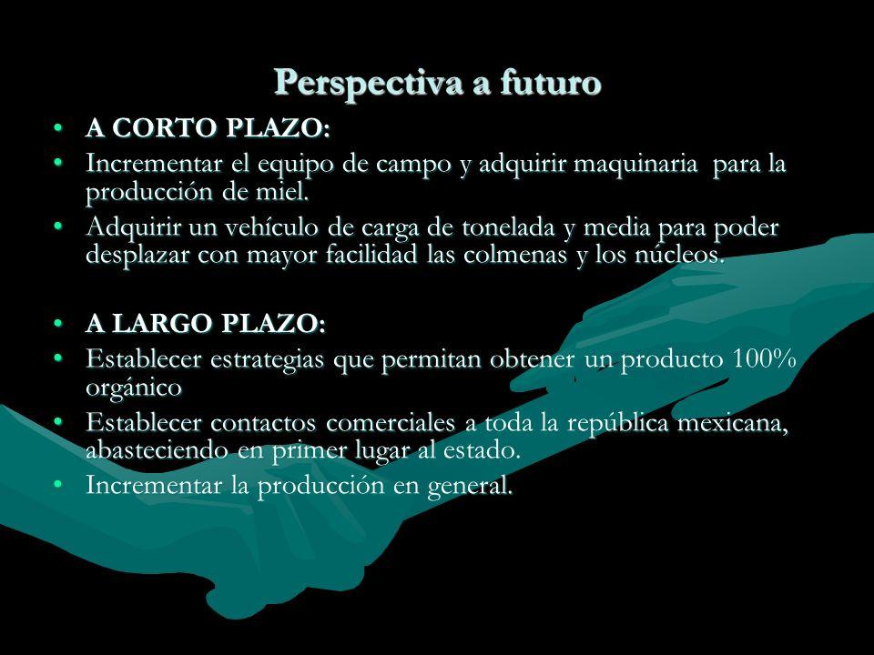 Perspectiva a futuro A CORTO PLAZO:A CORTO PLAZO: Incrementar el equipo de campo y adquirir maquinaria para la producción de miel.Incrementar el equip