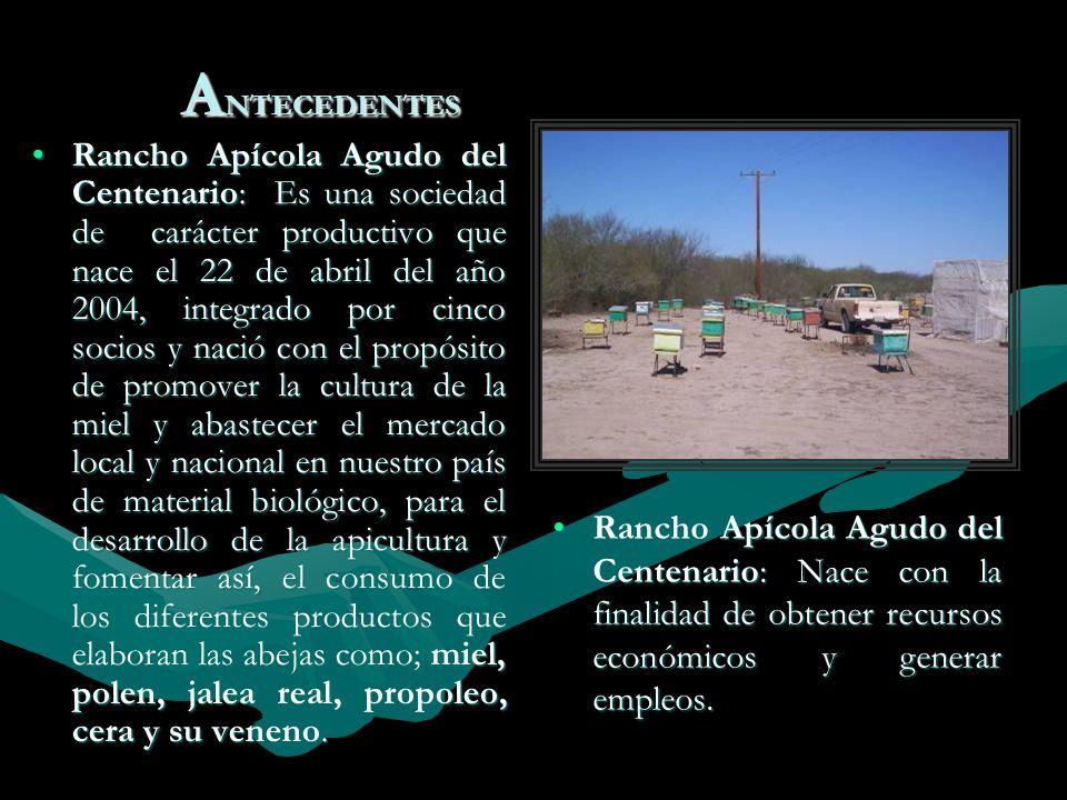 A NTECEDENTES Rancho Apícola Agudo del Centenario: Es una sociedad de carácter productivo que nace el 22 de abril del año 2004, integrado por cinco so