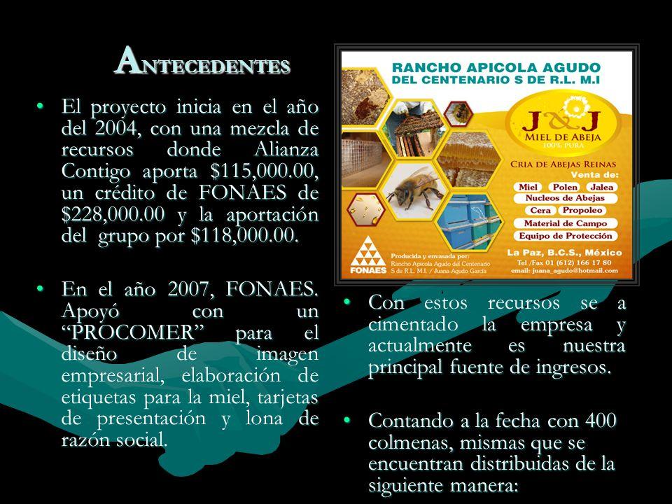 A NTECEDENTES El proyecto inicia en el año del 2004, con una mezcla de recursos donde Alianza Contigo aporta $115,000.00, un crédito de FONAES de $228