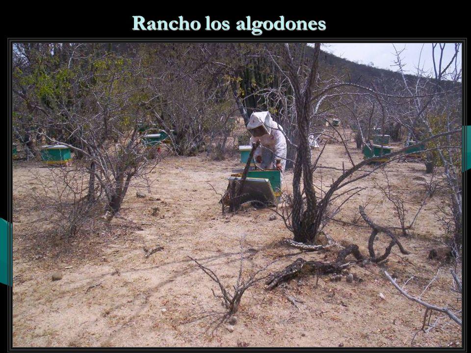 Rancho los algodones