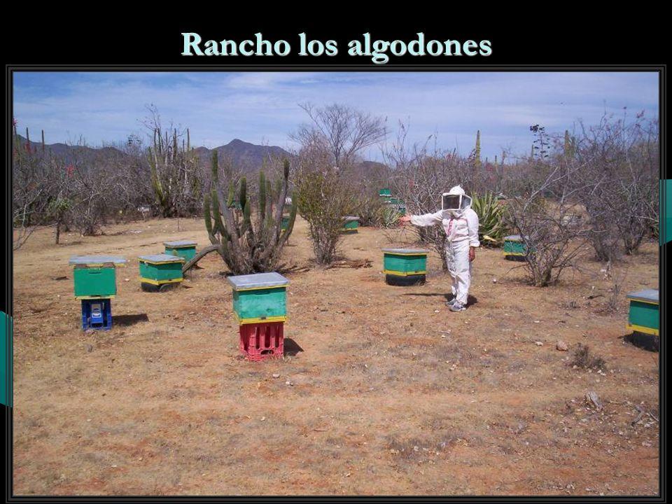 Rancho Álvaro Obregón