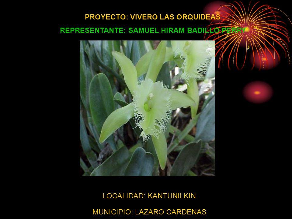 PROYECTO: VIVERO LAS ORQUIDEAS REPRESENTANTE: SAMUEL HIRAM BADILLO PERRY LOCALIDAD: KANTUNILKIN MUNICIPIO: LAZARO CARDENAS