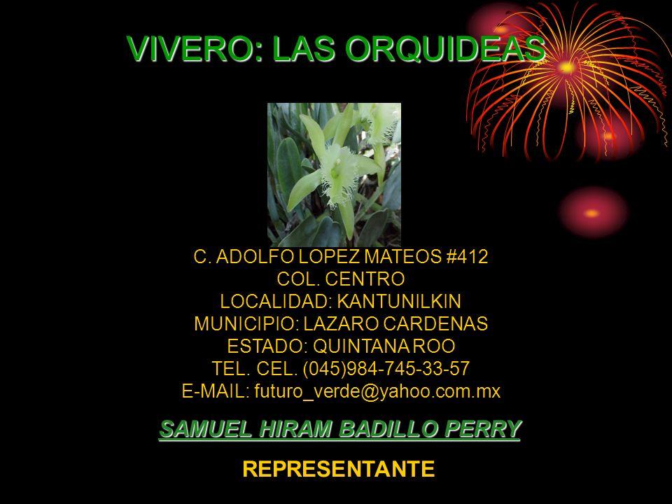 CATALOGO DE PALMAS VIVERO: LAS ORQUIDEAS SAMUEL HIRAM BADILLO PERRY REPRESENTANTE C. ADOLFO LOPEZ MATEOS #412 COL. CENTRO LOCALIDAD: KANTUNILKIN MUNIC