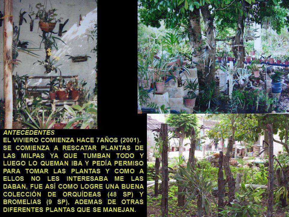 ANTECEDENTES EL VIVIERO COMIENZA HACE 7AÑOS (2001). SE COMIENZA A RESCATAR PLANTAS DE LAS MILPAS YA QUE TUMBAN TODO Y LUEGO LO QUEMAN IBA Y PEDÍA PERM