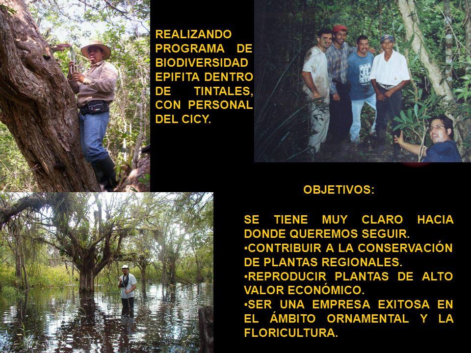 SE TIENE MUY CLARO HACIA DONDE QUEREMOS SEGUIR. CONTRIBUIR A LA CONSERVACIÓN DE PLANTAS REGIONALES. REPRODUCIR PLANTAS DE ALTO VALOR ECONÓMICO. SER UN