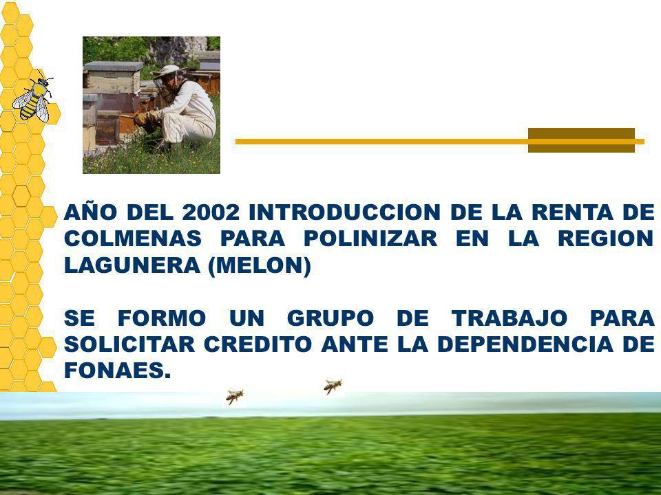 AÑO DEL 2002 INTRODUCCION DE LA RENTA DE COLMENAS PARA POLINIZAR EN LA REGION LAGUNERA (MELON) SE FORMO UN GRUPO DE TRABAJO PARA SOLICITAR CREDITO ANT