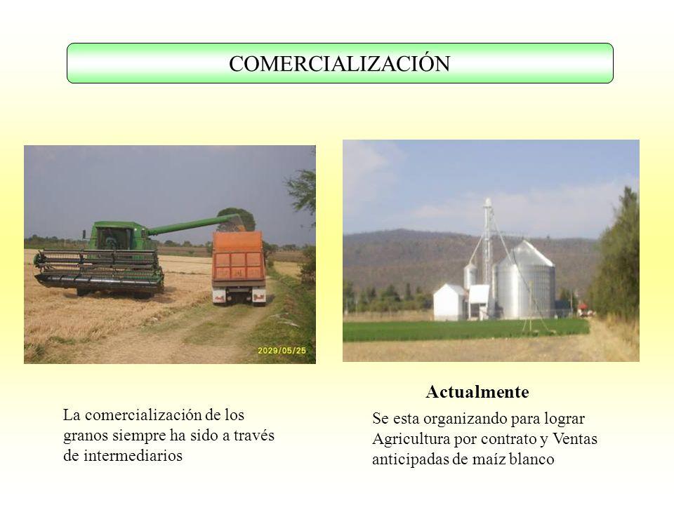 COMERCIALIZACIÓN La comercialización de los granos siempre ha sido a través de intermediarios Se esta organizando para lograr Agricultura por contrato