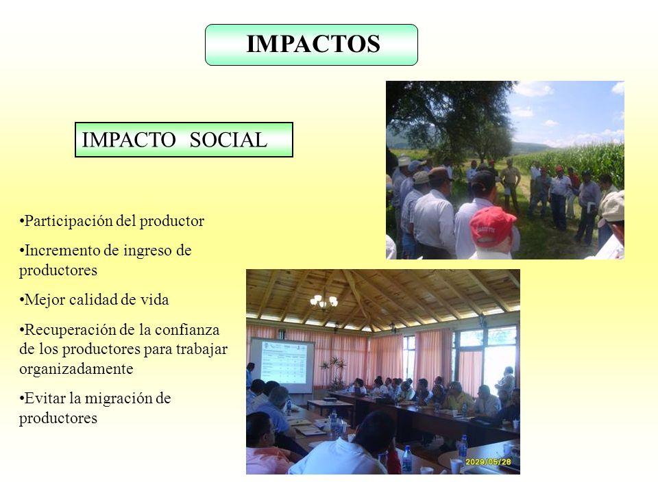 IMPACTOS IMPACTO SOCIAL Participación del productor Incremento de ingreso de productores Mejor calidad de vida Recuperación de la confianza de los pro