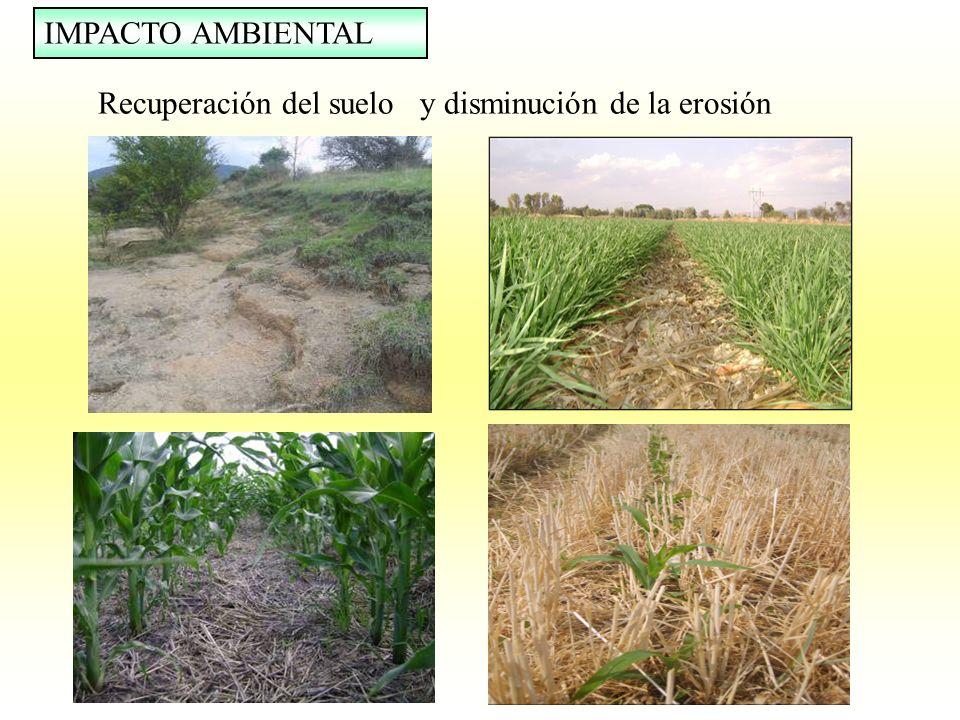 Recuperación del suelo y disminución de la erosión IMPACTO AMBIENTAL