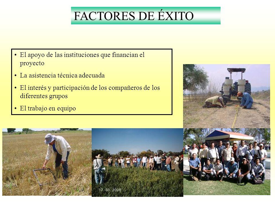 FACTORES DE ÉXITO El apoyo de las instituciones que financian el proyecto La asistencia técnica adecuada El interés y participación de los compañeros