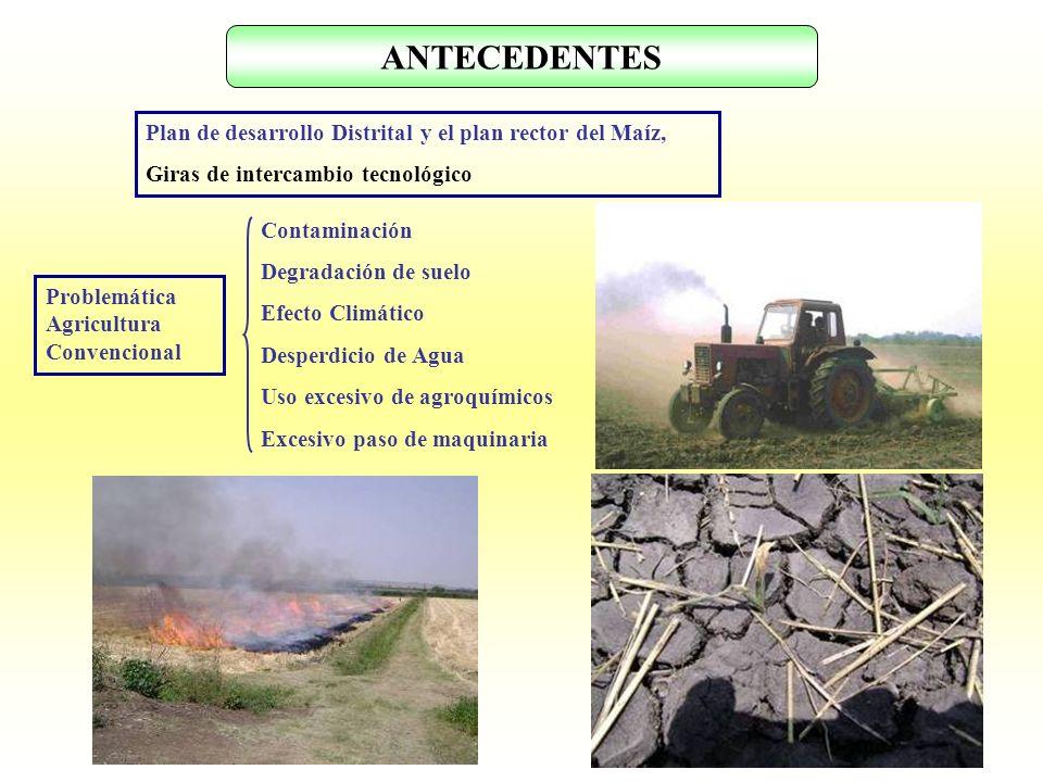 ANTECEDENTES Plan de desarrollo Distrital y el plan rector del Maíz, Giras de intercambio tecnológico Contaminación Degradación de suelo Efecto Climát